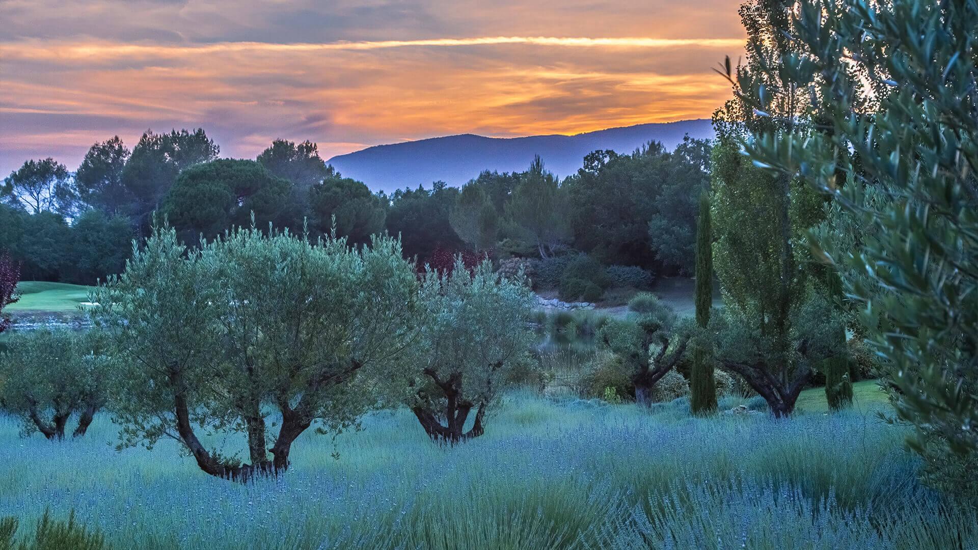 Villa Fayence garden at sunset